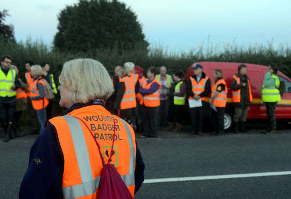 Wounded Badger Patrollers - Photo from Gloucesthsire Echo