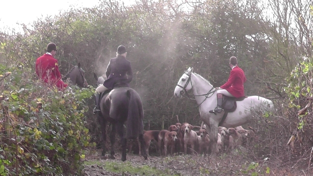 Just exercising the hounds my arse.
