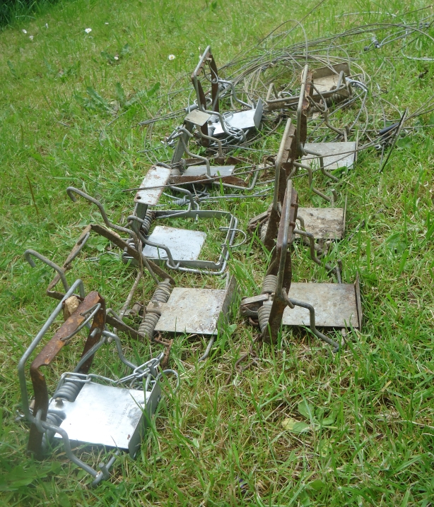 The removed snares and traps.