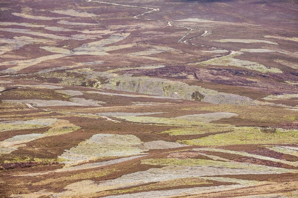 Patchwork of vegetation across grouse moor, Deeside, Scotland.