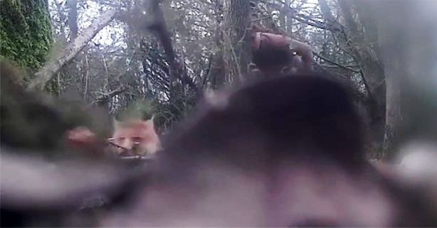FoxCam_opt